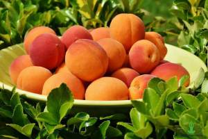 8 Best Benefits of Apricot