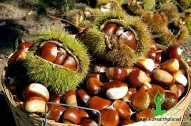 Reasons Chestnuts are good for Health