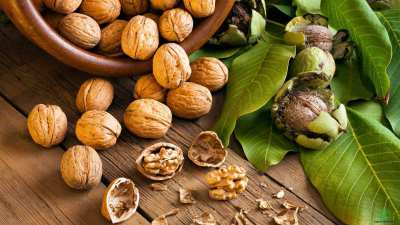 Things about walnuts you need to know