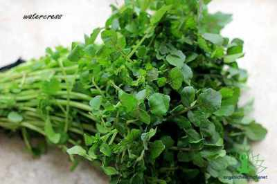 13 Advantages and Facts about Watercress