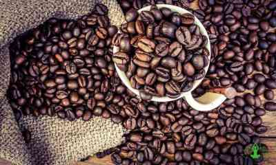 9 reasons why coffee is the best beverage ever