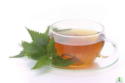 Nettle Tea and Its Benefits